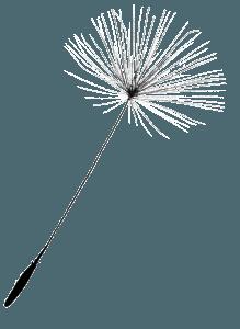 Graine de pissenlit detouree blanc 30-100 - Adeline Guillemaut