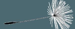 Graine pissenlit horizontale - Adeline Guillemaut