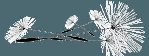 Visuel graines de pissenlits - Adeline Guillemaut