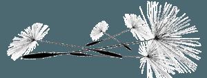 Visuel graines de pissenlits 500 - Adeline Guillemaut
